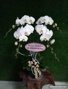 Điện hoa chất lượng, Thới Bình Cà Mau, hoa tươi rẻ đẹp.